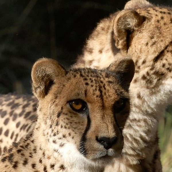 palm desert zoo coupons