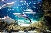 Private - Panoramic Melbourne City Tour With Sea Life Aquarium