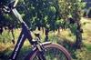 Giro in bicicletta elettrica a Firenze con visita ai vigneti