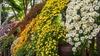 "New York Botanical Garden - Bronx Park: ""Kiku Evenings"" - Saturday October 15, 2016 / 7:00pm - 10:00pm"