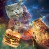 """Hamburger Cat Cabaret"" - Saturday July 8, 2017 / 8:00pm"