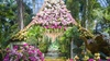 """New York Botanical Garden - Bronx Park: """"The Orchid Show: Thailand"""" at NYBG - Thursday April 6, 2017 / 10:00am-6:00pm"""