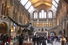 London Natural History Museum with Dinosaurs Gallery Private Tour f...