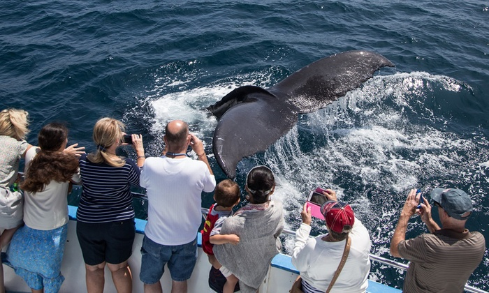 Whale And Dolphin Watching Cruises With