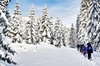 Snowshoe Through Vancouver's Winter Wonderland