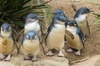 Healesville Sanctuary And Phillip Island Wildlife Bus Tour