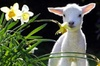Lyttelton Cruise Excursions: Christchurch Sightseeing with Sheep Farm