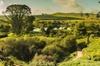 The Hobbiton Tour - Auckland Tour House