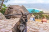 Wineglass Bay & Freycinet NP Full Day Tour from Hobart via Historic...