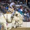 National Western Stock Show: Colorado vs. The World Rodeo - Saturda...