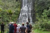 Coast and Rainforest Guided Eco-Tour from Auckland Including Lunch