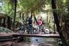 Redwoods Mountain Bike Ebike Tour HD