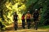 Remutaka Rail Trail Cycle Tour from Wellington