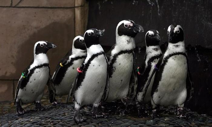 About Long Island Aquarium