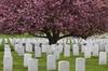 War Memorial and Arlington Cemetery Tour