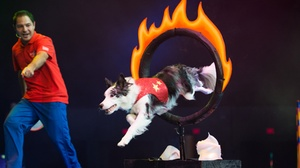 Pantages Theater at Broadway Center for the Performing Arts: Stunt Dog Experience at Pantages Theater at Broadway Center for the Performing Arts