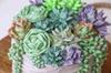 Buttercream Succulent Flowers