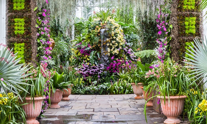 The orchid show new york botanical garden groupon - Bronx botanical garden free admission ...