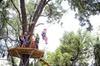 Treetop Express Zip Line Tour with 5 Zip Line Flights & 2 Sky Bridg...