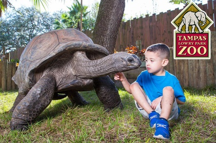 Tampa's Lowry Park Zoo Admission f66ddc90-0726-4348-97e1-5822c7ff9491