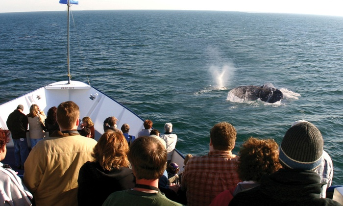 Hornblower Cruises & Events - Central San Diego: Hornblower Whale & Dolphin Watching Cruise at Hornblower Cruises & Events