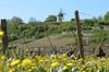 Excursion œnologique privée d'une journée en Bourgogne au départ de...