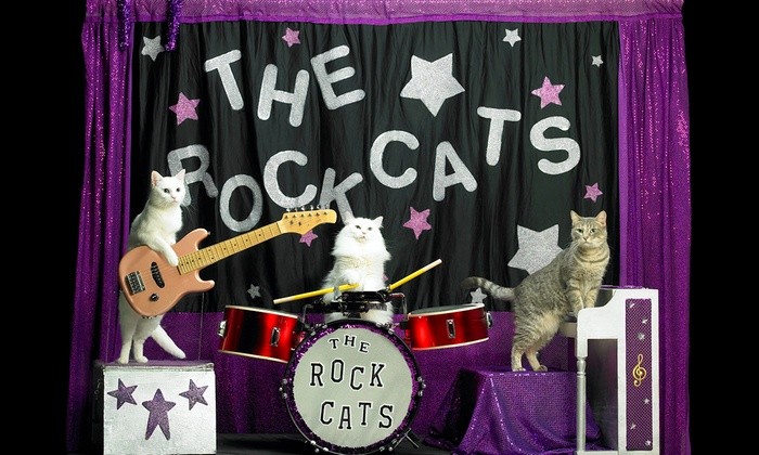 Playhouse on the Park - Willo: The Amazing Acro-Cats Featuring Tuna and The Rock Cats at Playhouse on the Park