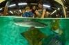 Irukandji Shark and Ray Aquarium Entry Ticket with Optional Shark E...
