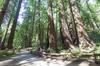 San Francisco Sightseeing/Horizon Coachlines - San Francisco: Muir Woods and Sausalito Tour from San Francisco with Bay Cruise