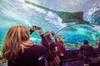 Ripley's Aquarium of Canada Entry