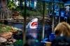 Houston City Tour and Downtown Aquarium All Rides Pass