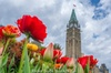 Ottawa Spring Tulip Festival Bike Tour