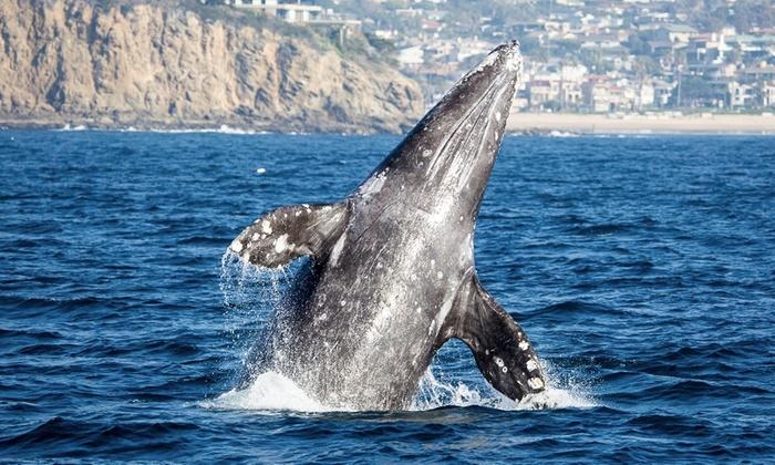 Davey's Locker Ships - Newport Beach: Whale and Dolphin Watching Cruises With Davey's Locker