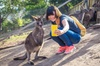 From Melbourne Ballarat Tour : The Gold Trail and Australian Wildli...