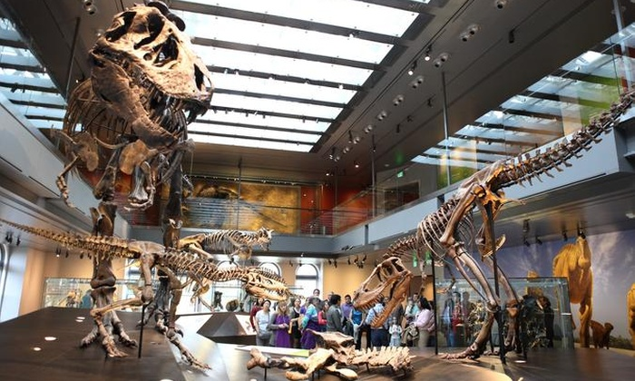 Groupon For Museum Of Natural History