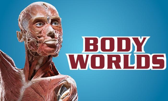 Discovery Times Square - Discovery Times Square: Body Worlds