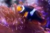 Keine Warteschlangen: Eintrittskarte SEA LIFE Königswinter