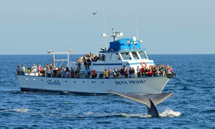 Dana Wharf Boats - Villa San Juan Mobile Home Park: Whale and Dolphin Watching From Dana Point