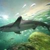 Skip the Line: Ripley's Aquarium of Canada in Toronto