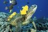 Waikiki Turtle Snorkel Adventure