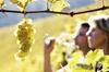 Tour des vignobles de la vallée du Rhône au départ d'Avignon: Chât...