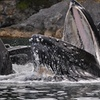 Superior Whale Watching - 3hrs on the water!