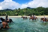 Afternoon Beach Horse Ride in Cape Tribulation