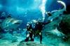 Shark Dive Experience at SEA LIFE Melbourne Aquarium