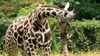 Bronx Zoo - West Bronx: The Bronx Zoo at Bronx Zoo