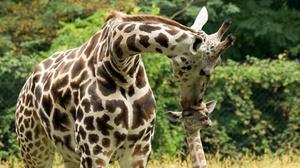 Bronx Zoo: The Bronx Zoo at Bronx Zoo