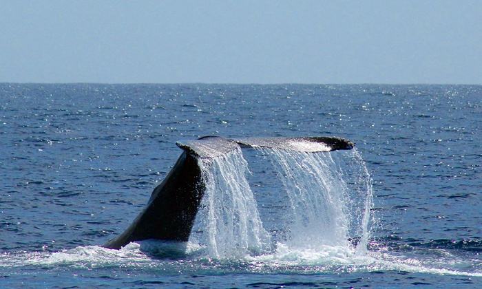 Oceanside Adventures  - Downtown Oceanside: Oceanside Whale and Dolphin Tours