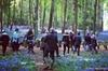 Nomadic. Presents...Hidden Woodland Feast