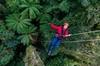 Thrilling Zipline Adventure in Rotorua's Native Forest & Tauranga S...