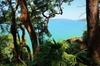 Bush And Beach Day Tour: Ku-Ring-Gai Chase National Park and Palm B...
